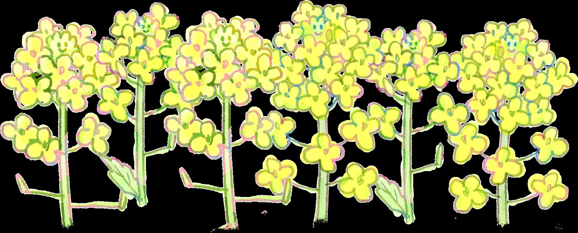 菜の花イラスト / 早春の挿絵に(1輪~3輪~ライン) | 可愛い無料