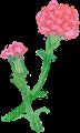 手書きカーネーション、短い二輪の花イラスト