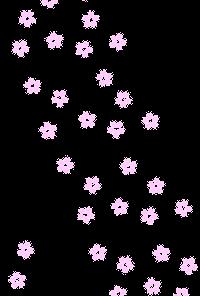 桜の花透過素材